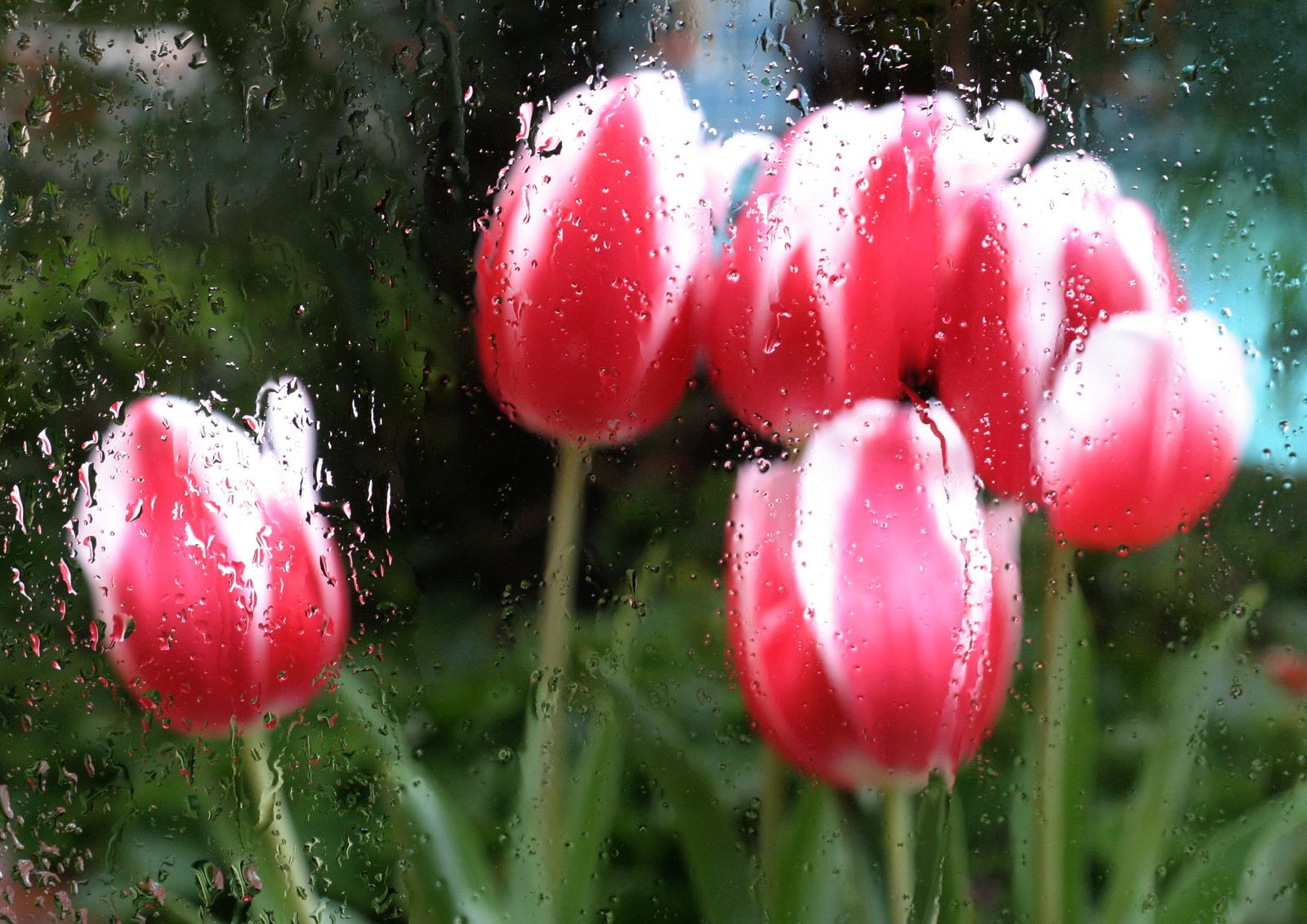APRIL SHOWERs BRING MAY FLOWERS APRIL POEMS BRING MAY PODCASTS