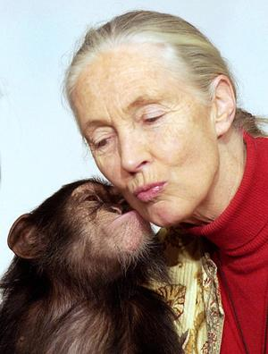 jane goodall writing contest